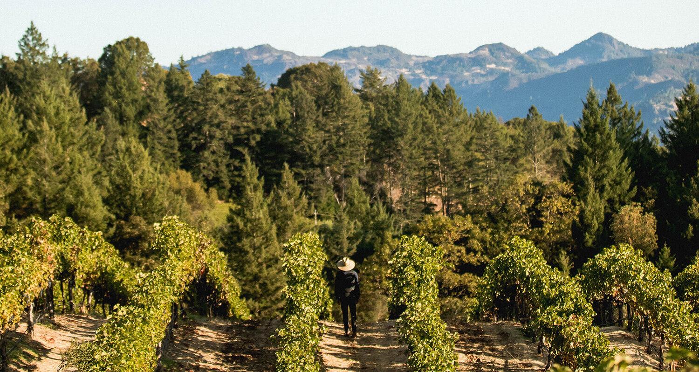 napa photography vineyard