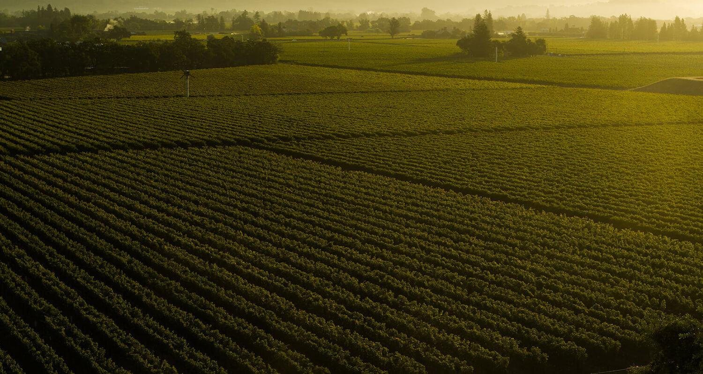 napa photography landscape vineyard